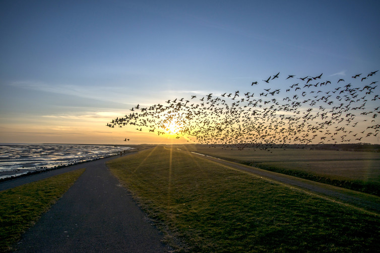 Migrating birds use a magnetic map to travel long distances