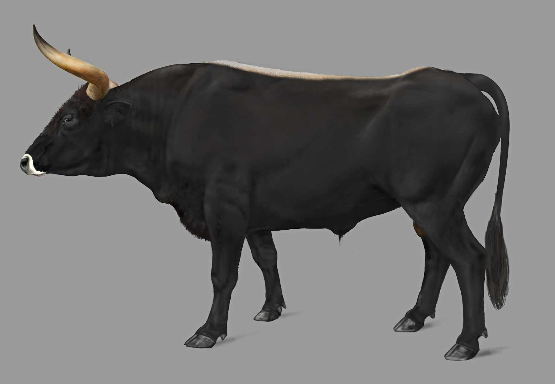 True Nature Foundation starts international project to bring back the aurochs