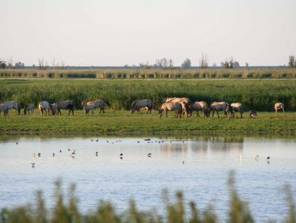 The Future of the Oostvaardersplassen: Ecological Corridors and Predation