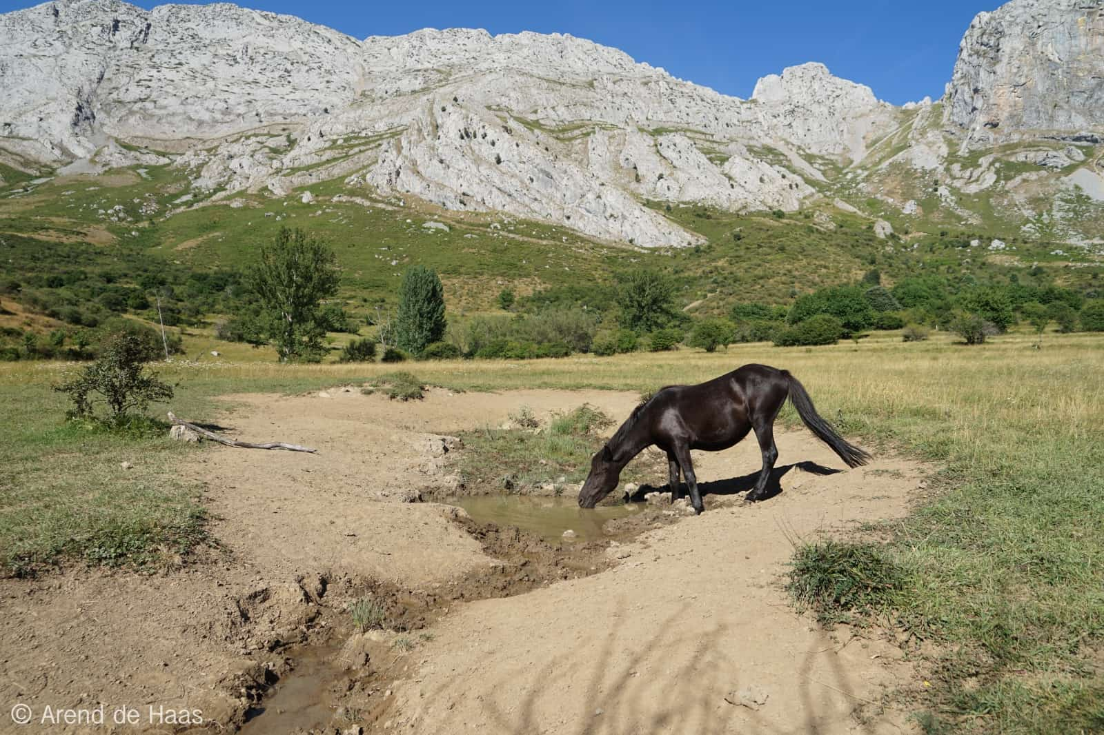 wild-horse-drinking-valle-del-bisonte-anciles-reserve-18