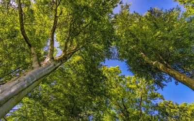 Restoring natural forests is the best way to capture carbon and reverse climate change