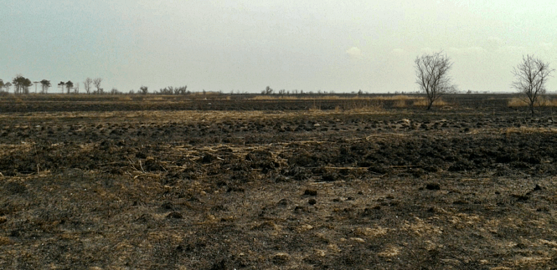 Wildfire in reed bed
