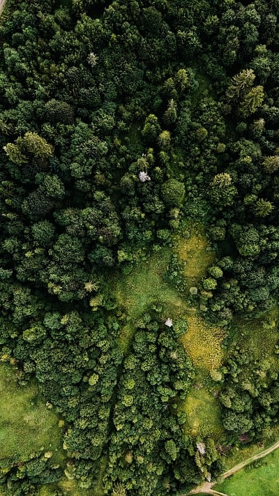 restore forests